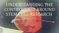Understanding the stem cell controversy